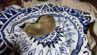 このネコの寝姿を見てどう思いますか
