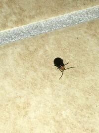虫の名前  家の玄関天井にこのような虫がいました。 傘でつついて落としましたが 飛ぶことも足で移動することもなく じっとしているだけです。 何か害虫でしょうか。。。