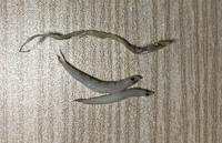 写真の魚がしらす干しの中に混ざっていました。 上の魚は大きさが5センチくらいで、取り出して少し時間が経ったものなので、もう乾燥してしまっています。  何という名前の魚でしょうか?    また、下の2匹の魚はしらすですか?  他のしらすと比べて少し大きめで、背中の模様が少し違う気がするのですが…