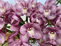 大輪系のシンビジュームの品種を教えてください。  写真のお花は横が9センチ位です。 お花の大きさに一目惚れして購入しました。 他にも大輪のシンビがありましたら、教えてください。 写真や品種名、お花の大きさが載っているホームページでも良いので、宜しくお願いいたします。  シンビジウム 洋蘭