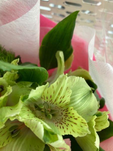 この花の名前を教えてください!