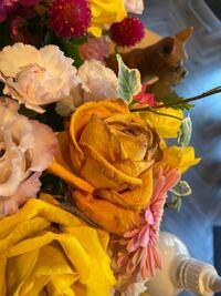 花びらが写真のように変色してしまいました 原因と長持ちさせる方法を教えてください。  ちなみに切り花でスポンジ?みたいなのに刺さってます。