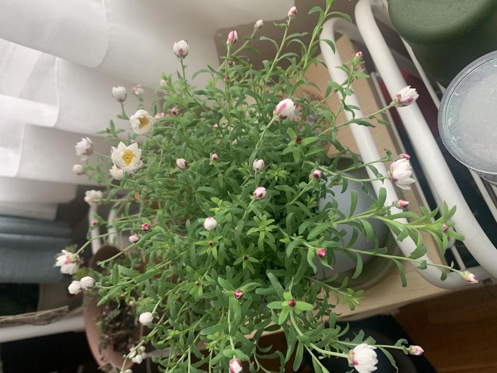 こちらのお花の名前が知りたいです。 よろしくお願い致します!