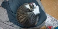 この猫の寝姿を見てどう思いますか