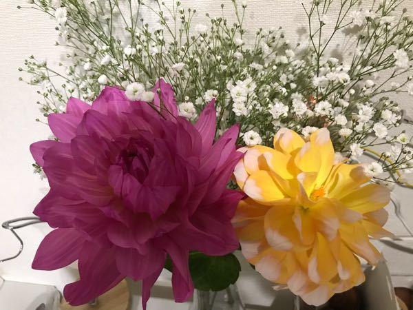 こちらの花の名前が分かる方いましたら、お願い致します。(かすみ草の前に写っているお花です)