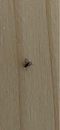 この時期になると自宅の外壁に米粒より小さい虫が大量に出ます。この前、殺虫剤で殺したのですが、 また次の日になると大量に湧いて来ます。 昼間の風の当たらない壁に現れて夕方になると全て居なくなります。  画像を載せるので何の虫か分かる方いましたら教えてください。気持ち悪くて困ってます。来なくなる方法はやっぱり無いですか? よろしくお願いします。
