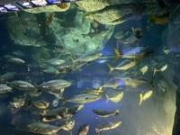 鳥羽水族館の一部の水槽、なんかすごい密度が高いけどなんでこんなに密度が高い飼育になっているのでしょう? 病気が発生しそうで心配になります