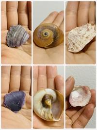 海岸沿いで見つけた貝殻なのですが、それぞれなんと言う貝ですか?