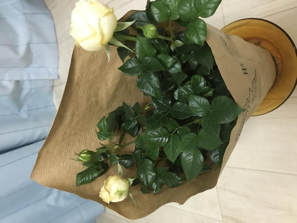 コーナン で購入した薔薇が枯れてきました。 どの様な事が考えられますか? ●購入してに2週間経過しています。 ●夜はお家に入れています。 ●植え替えるべきですか?