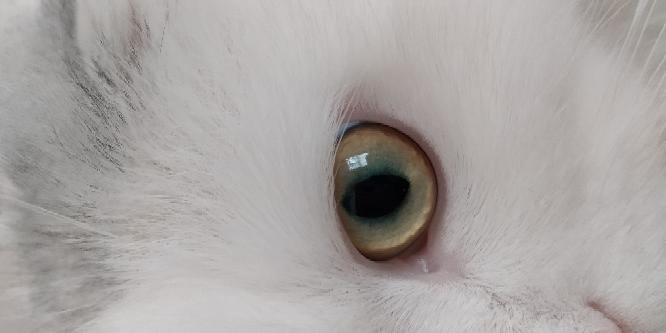 この猫の目は何色っていうのでしょうか?? 真っ黄色ではないのでイエローではないですか?;;(∩´~`∩);;
