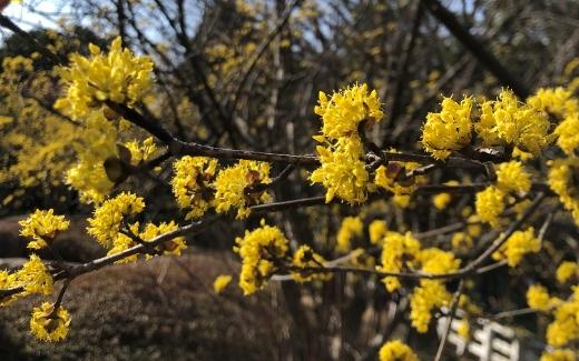 これは何の花でしょうか? 撮影日は2021年3月7日、撮影場所は兵庫県です。 よろしくお願いします。