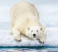 【大喜利】まいくNHです。 . 台詞をどうぞ!  (僕もたまには、こんなお題も出してみよーっと(^^;)  [例] 「えっ?温水プール、昨日で終わりなの?」(T_T) ただの冷水?これ・・・。 いやいや、動物虐待じゃないっすか?」