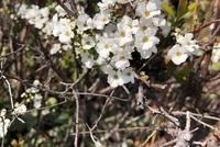 この花の名前は何ですか? 撮影場所は兵庫県で撮影日時は2021年3月11日です。 よろしくお願いします。