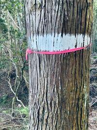 近隣の林道や我が家の山林にピンク色目印テープが貼られています。道しるべのように木に結び付けたり巻いてあったりします。このグループは、何ですか?連絡先教えて頂きたいです。