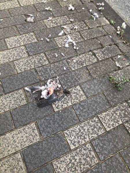 これって何の仕業ですか 鳩が死んでました。