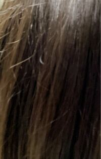 ヘアオイルを使っているのですが、髪の毛がパサパサ?します。 なんか途中で切れたような髪の毛が色んなところからピンピンしてます。 治す、隠す方法あったら教えてください。