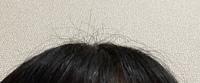 アホ毛??切れ毛がすごく目立ちます。 私は朝起きたらすごく毛が抜けているのですが明らかに根元からではなく切れている感じがあって(お風呂入ってる時もです)このような細かい毛がめだちます。アホ毛止めるスタイリング剤等試していますが付けてこうなってます。切れ毛を抑える方法やそもそも切れないようにする方法あったら教えてください、、