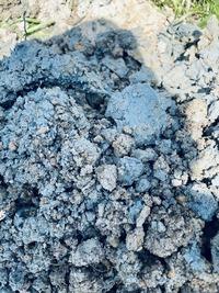 果樹を植えるために穴を掘っていたら青い土が出てきたのですがこれはなんですか?