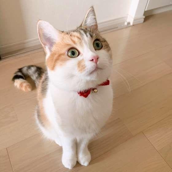 これは三毛猫ですか?