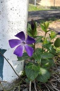 この花の名前は何でしょうか? 撮影場所は兵庫県で撮影日時は2021年3月14日です。 よろしくお願いします。