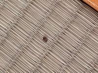最近引っ越しをして家の中に虫が 出るようになりました。 この虫はなんの虫でしょうか。