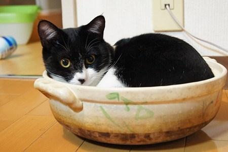 ブルマー将軍に質問です はちわれ猫のまーず君と、あのまーずマンとどちらがかわいいですか?