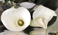 この白い花の名前を教えて頂きたいのですが、よろしくお願いします。(*'ω'*)