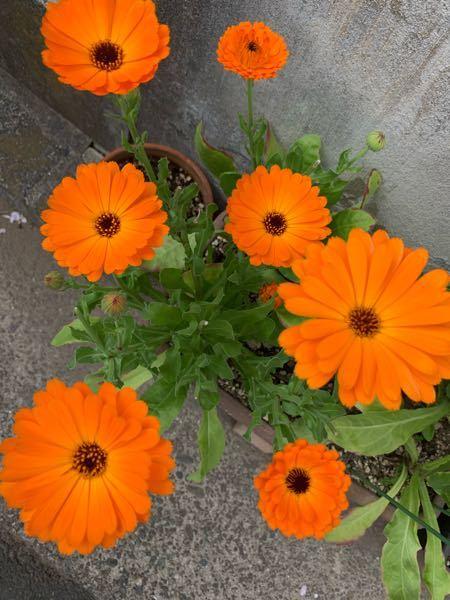 このお花の名前を知りたいです。