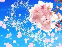 桜の開花とともにFXを始めて、花が散るように金が減っていくぜ。 なかなか風流だろう? こんな俺に何か言いたいことが有る奴はいるか?