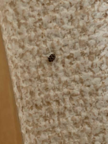 部屋の壁に付いていたこの小さなダニのような生物…黄色と黒のマダラで気持ちの悪い配色です。ご存知の方、この生き物の名前を教えてください。