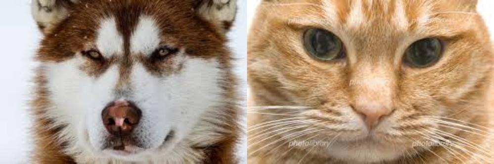 犬と猫 どっちが好き? ①犬。 ②猫。