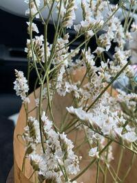 写真の花はかすみ草ではなくスターチスでしょうか?