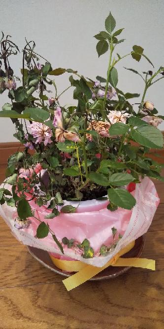 画像見にくくてすみません この花、もうほぼ枯れているのですが、再復活しますかね? 自分の母が、新年会で貰った物なのですが… 10日くらいで枯れてしまいました 母は、「少し乾燥した方がいい...