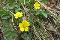 この花の名前を教えて下さい。 新潟県の弥彦山に咲いてました。