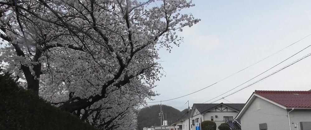 【Adobe premium elements 2020】 桜の映像を編集しています。 空や桜の木を鮮やかに見えるように調整したいのですが、 中々思うようにできません。 全体的に暗いというか、ソフトを上手く使いこなせていないせいだとは思いますが、 コツなどがあれば教えてほしいです。 ※参考までに添付画像をご覧ください。