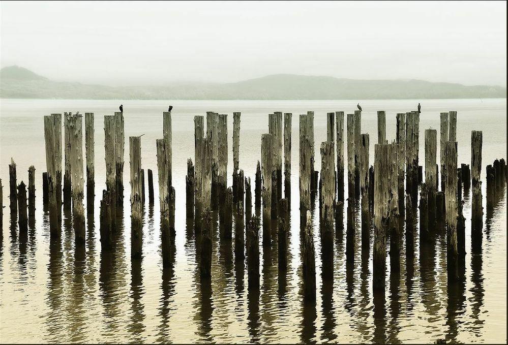棒がたくさん刺さってる場所というと、どこを思い浮かべますか? ㅤ 私はこういった海(?)です。