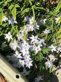 庭に生えてる花なのですが何という名前の花でしょう?植物に詳しい方よろしくお願い致します。