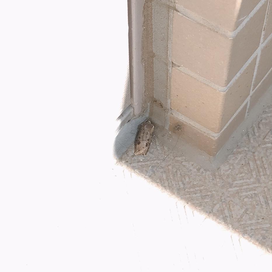【虫画像注意!】 家の前に虫らしきものがいます… これは何の虫でしょうか??