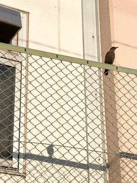 これはなんという鳥ですか?