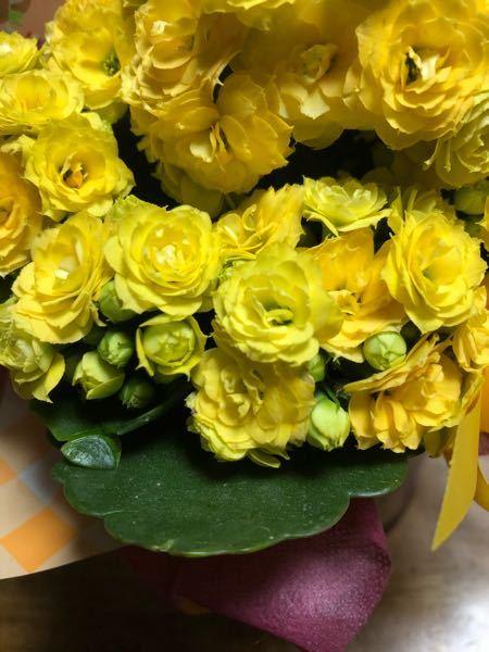 花の名前について この画像の花の名前はなんでしょう? 友人から頂きとてもかわいかったので他にも色があったりするのか調べたかったのですが...。 見づらかったらすみません
