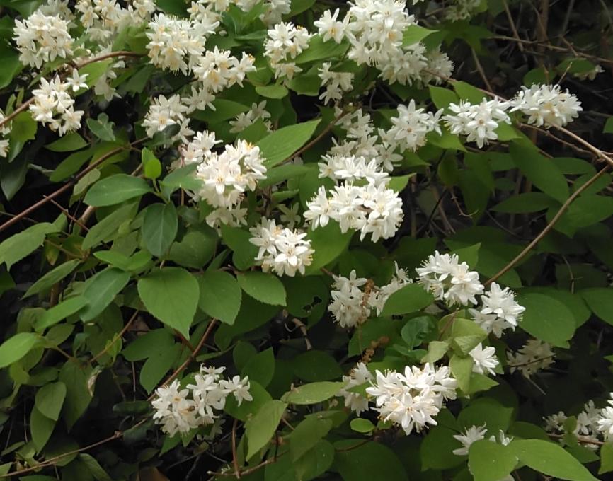 これは何の花ですか?山の斜面にたくさん咲いていてきれいでした!