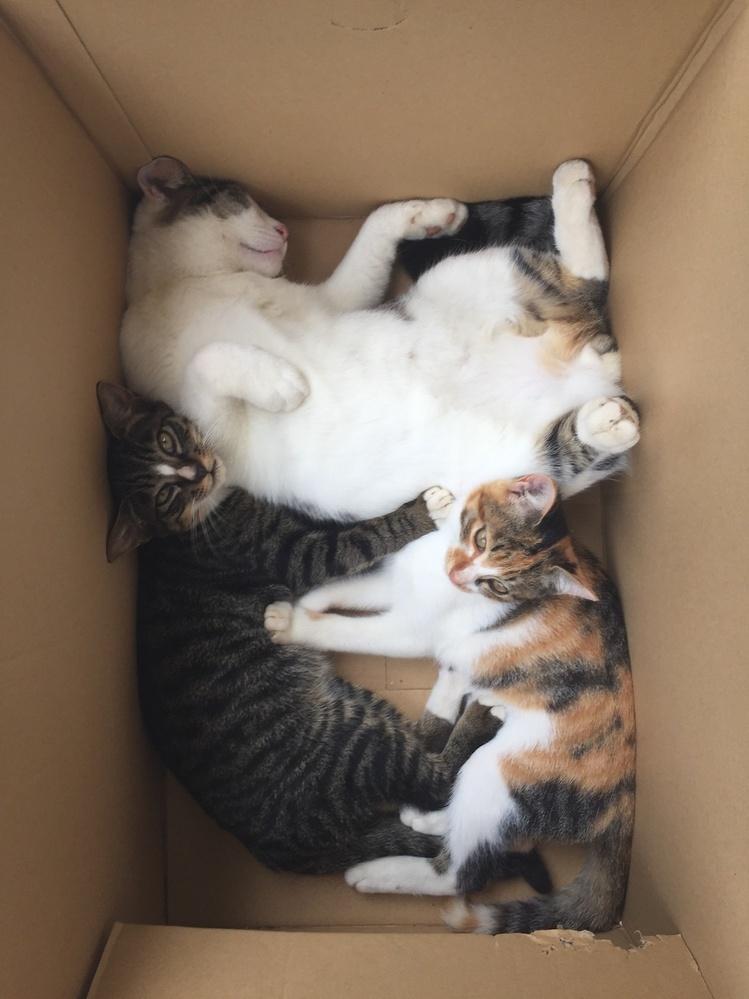 猫の仔猫から成猫になるまでの 9ヶ月位と言いますか、一年と言いますか、 この時期を一緒に過ごせるのって 中々貴重ですよね? 成猫は大好きですが、 子猫も大好きで癒されるので、 しみじみ感じますね。