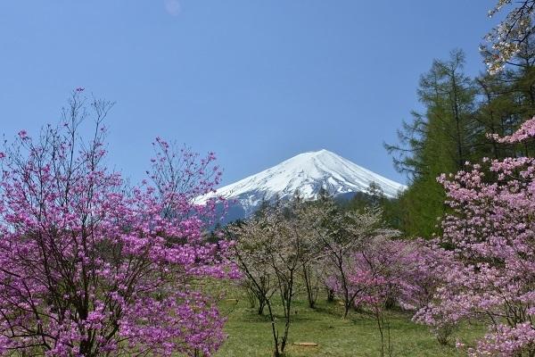 河口湖船津 創造の森から ミツバツツジ・フジサクラと富士が見られる場所(位置)を知りたいので、宜しくお願いします。