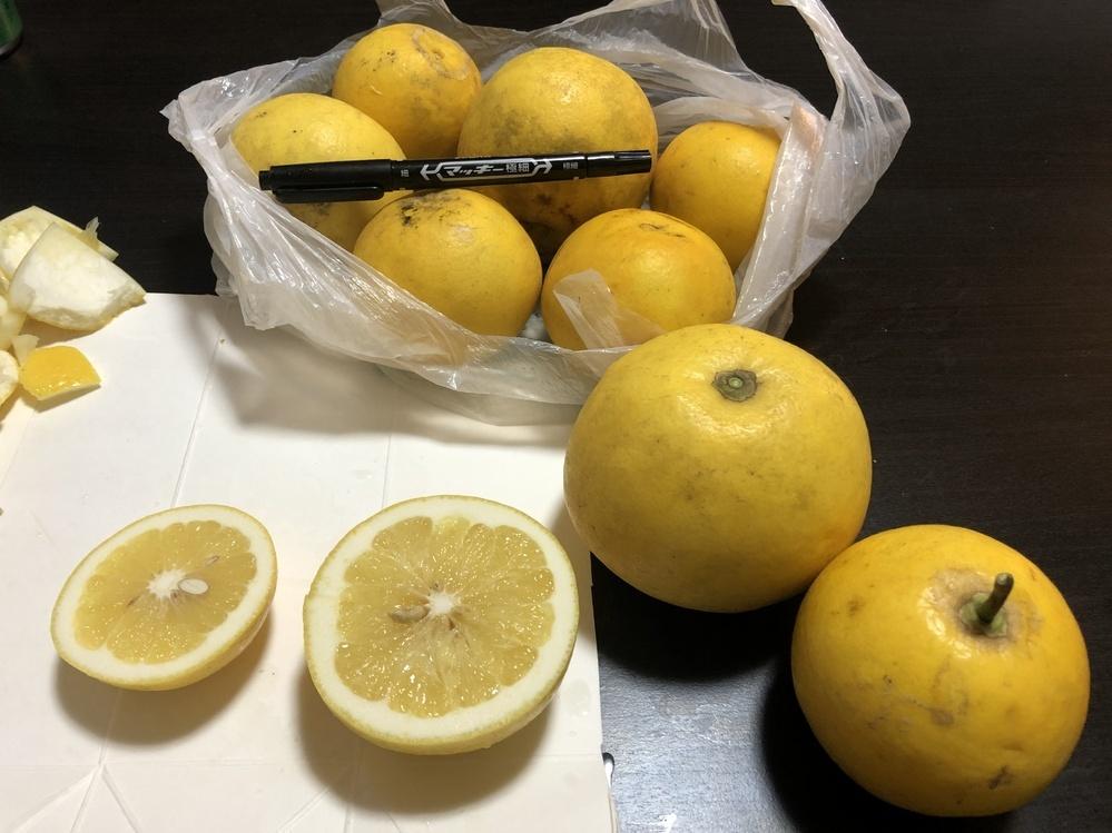 柑橘系に詳しい方教えてください! 神奈川県に住んでいる親戚からいただきました 何かわからない柑橘系の果物だそうです笑 味はグレープフルーツのような酸味と苦味があります 外皮は硬く厚いので包丁を使って切りましたが中の薄皮はそのまま食べても大丈夫でした 大きはさ10センチ無いくらいです 表面はツルツルしています 植物好きな祖父が植えたそうですが、今は亡くなっているので誰も何かは知らないそうです