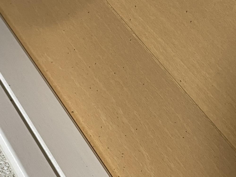 家の床に突如、小さい虫が大量に発生しました。この虫の名前と対処方法わかる方いましたら教えてください ♀️