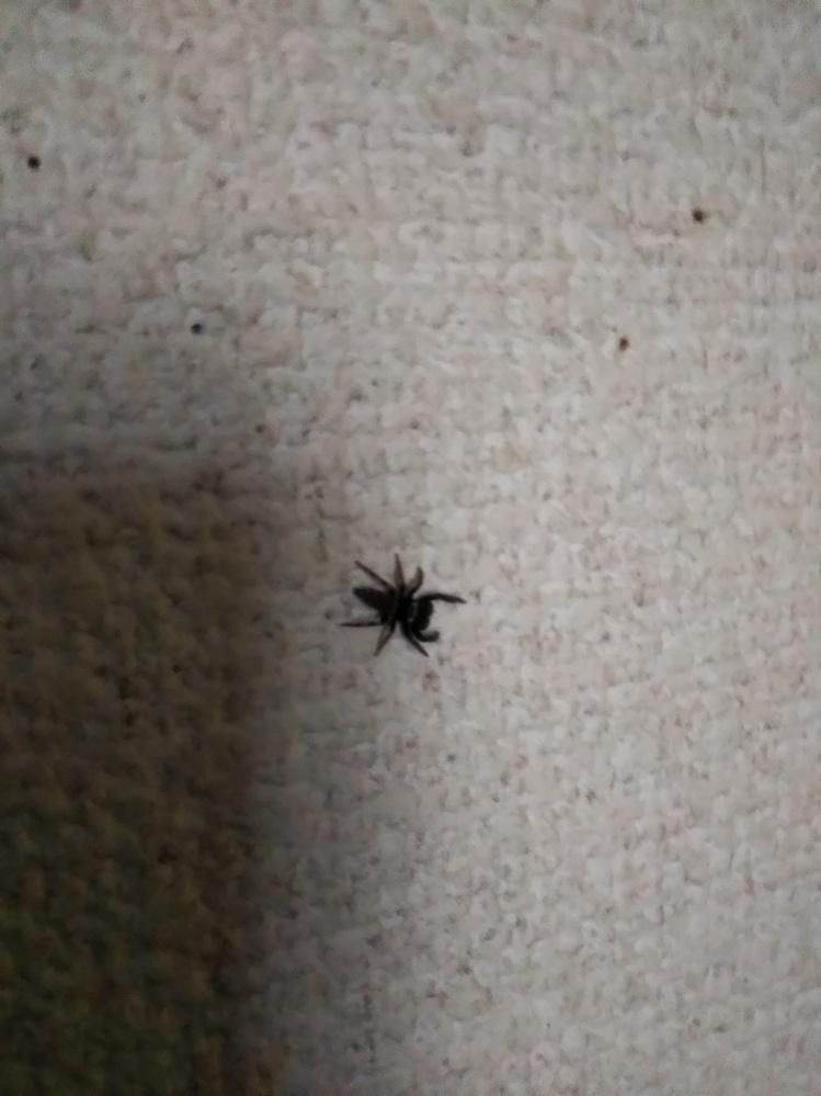 これは何という虫ですか 毒はありますか?