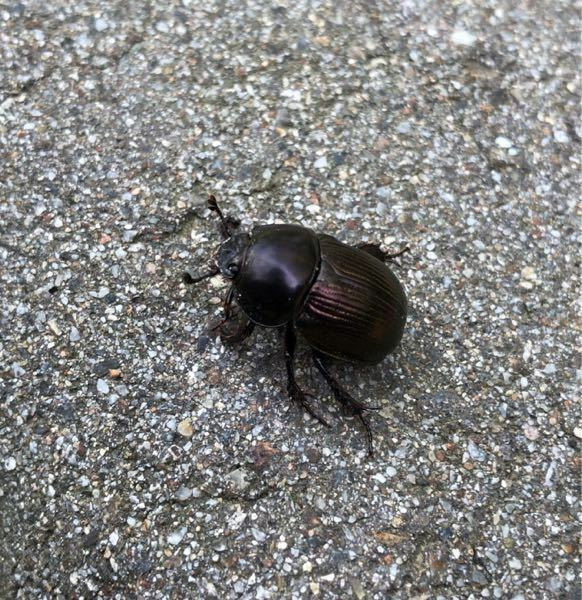 昆虫に詳しい方教えてください。 この昆虫は何て名前ですか?
