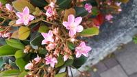 散歩中に見つけました。 見たことがある花ですが、名前がわかりません。 お分かりの方方、ご教示ください。