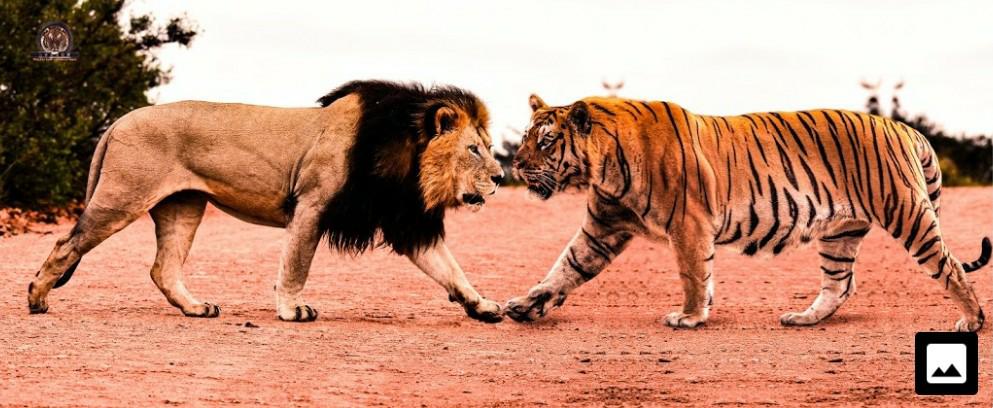 ライオンやトラは超ヤバい心霊スポットに訪れた場合に恐れますかね?