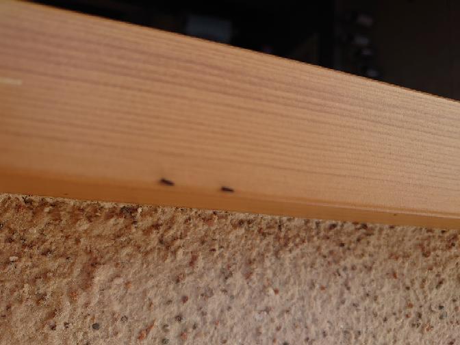 玄関に4ミリくらいのこんな虫がいました。これはなんの幼虫ですか?